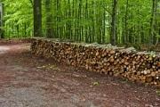Указания за предоставяне на дървесина на физически лица