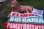 МС Елинор се връща с медали, купа и призови места от Европейското Гранд При в Сегед